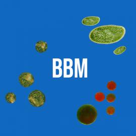 Milieu Bbm
