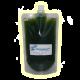 ✭ Muriellopsis sphaerica - Souche - 250ml Spootbag ✭