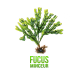 ✭ Fucus - Complément alimentaire - 100% naturel ✭