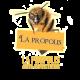 ✭ Propolis - Complément alimentaire - 100% naturel ✭