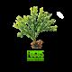 ✭ Fucus Poudre - Complément alimentaire - 100% naturel ✭