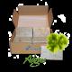 ✭ Savon de Marseille aux algues marine - Boîte de 8 savons ✭