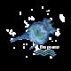✭ Brachionus plicatilis Nourriture vivante - Alimentation pour larves, crustacés, coraux ✭