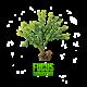 ✭ Fucus - Complément alimentaire - Minceur ✭