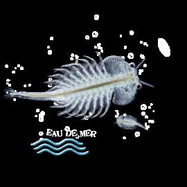 Artémia salina crustacé